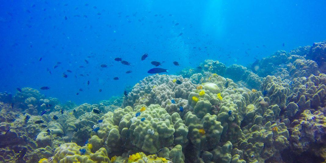 sensori sottomarini